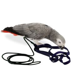 Special Section Anti-bite Flying Training Rope Parrot Bird Leash Kits Ultralight Harness Leash Comfortable Feel Pet Supplies