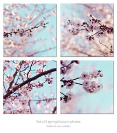 Cherry Blossom Photography sakura spring