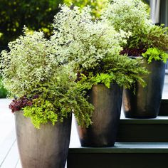 Designer Bartos created these planters to fit a ranch-style home with a bit of art deco thrown in. They're simple and contemporary; they're large and have strong architectural shapes. You need that scale to create drama. Container Design, Container Plants, Container Gardening, Garden Planters, Planter Pots, Planter Ideas, Outdoor Planters, Big Planters, Cool Plants