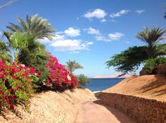 Domina Coral Bay
