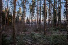 https://flic.kr/p/BGkfmS | Light in the forest