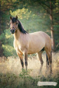 Reiten / Pferd » VS Photography