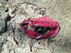 A dead more in women's panties, in the middle of the woods. This area is shady.