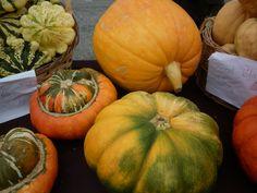 Quelques cucurbitacées exposées lors de la Foire aux courges à L'Epine le 20 septembre. #produitslocaux #baronnies #buech Saveur, Provence, Pumpkin, Vegetables, Alps, Gourds, Mountains, Fine Dining, Pumpkins