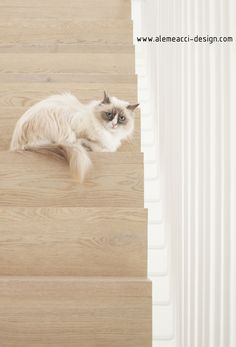Nordic Interiors in Padua : a Scandinavian style home. Stairs design : wood and soft colors palette. Cat approved! Interior design by Alessandra Meacci. www.alemeacci-design.com 