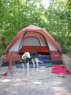 now there's one way to bring the mutt camping! Saves on boarding Hiking Dogs, Camping And Hiking, Camping Dogs, Greyhound Pictures, Grey Hound Dog, Animal Decor, Italian Greyhound, Pet Beds, Mans Best Friend