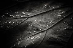 lotus leaf Photo by Yajun hu -- National Geographic Your Shot