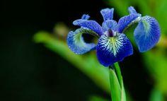 Photographer Paul Beduhn Gordon Parks, Dandelion, Flowers, Plants, Life, Dandelions, Plant, Taraxacum Officinale, Royal Icing Flowers