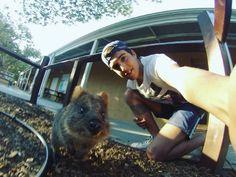 Quokka selfie #quokka#rottnestisland#australia#oz#perth by riky9655 http://ift.tt/1L5GqLp