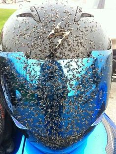 Damn!! Killing bugs is a full time occupation