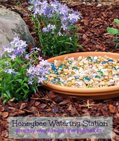 Whether you enjoy planting bright flowers or tasty vegetables, I encourage you to plant something this spring and do your part to save the pollinators (and thus ourselves!) from extinction! This honeybee watering station is a great way start!
