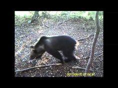 Un anno di orso marsicano