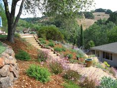 drought resistant landscaping ideas | Let's talk drought tolerant plants.