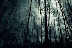 Image result for forest at night tumblr