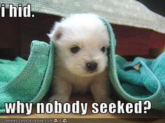 I would seek for that puppy it's so cute!!