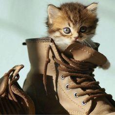 Cat Breeds, Cat Memes, Animal Pictures, Pet Supplies, Kitten, Cute Animals, Fox, Pets, Cute Kittens