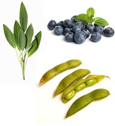 Brain Food Sage: brain booster for memory and recall.  Blueberries: increase memory performance. Edamame: mega iron and folate for high cognitive functioning.