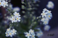 Nontiscordardime by ♥GIÖ♥, via Flickr
