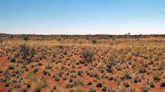 Desertul #Kalahari (Africa de sud)  Frumusetea Africii in 20 de poze deosebite (partea 1) - galerie foto.  Vezi mai multe poze pe www.ghiduri-turistice.info  Sursa : www.flickr.com/photos/jeppestown/3