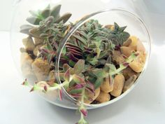Hanging Terrarium  Succulents in a Glass by FlathersCreations, $23.00