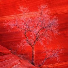 tree against red