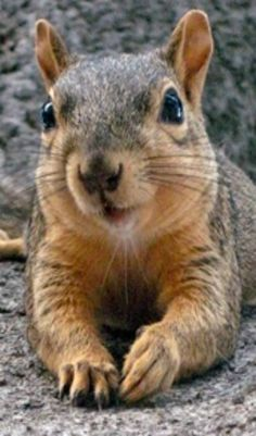 Squirrel - Up close and personal