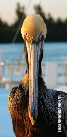 Pelican Standoff, Florida; photo by Simon Rimmington on 500px