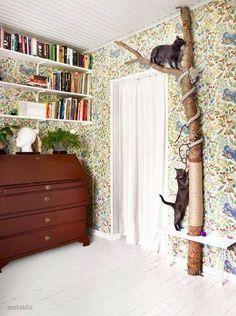 Original idea para gatunear nuestra casa, necesitamos un buen tronco sujetar al suelo, pared y techo, cuerda de sisal y una tabla que haga de repisa