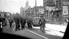 This photo is of a circus parade in the mid- to late-1930s in Buffalo,HY