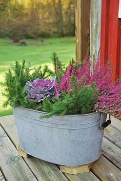 pot et fleur floral design Winter Garden, Flower Pots, Pretty Plants, Autumn Garden, Plants, Lawn And Garden, Autum Flowers, Ornamental Cabbage, Fall Flowers