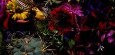 flower photography g