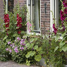 "A so called ""Frontage garden"", Amsterdam, The Nederlands."