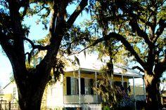 Madisonville - Louisiana Lake Pontchartrain, New Orleans Louisiana, North Shore, Plants, Plant, Planets