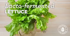 Lacto-Fermented Lettuce (Or Any Delicate Green) Recipe - Cultures for Health Types Of Lettuce, Dump Meals, Dump Recipes, Healthy Recipes, Lettuce Recipes, Eating Carrots, Green Lettuce, Fermentation Recipes, Long Term Food Storage