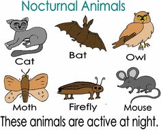 FREE Nocturnal Animals Printables | The run, For kids and ...