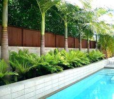 "25 Suitable Plants Grow Beside Swimming Pool > Fieltro.Net""> 25 Suitable Plants Grow Beside Swimming Pool > Fieltro. Palm Trees Garden, Palm Trees Landscaping, Backyard Trees, Backyard Pool Landscaping, Tropical Landscaping, Backyard Fences, Front Yard Landscaping, Landscaping Ideas, Privacy Landscaping"