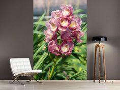 Foto #Tapete Wilde Orchideen
