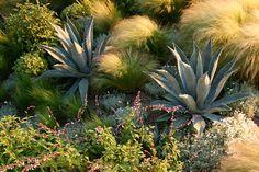 Landscape Design Laguna Beach — Molly Wood Garden Design