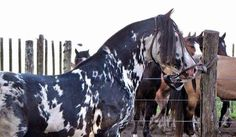 Very unique! Pinto horse -