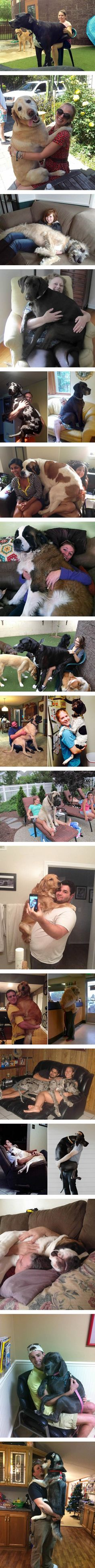 Big Dogs Who Think They're Lap Dogs