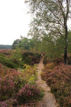 Heath, Veluwe between Elspeet and Garderen