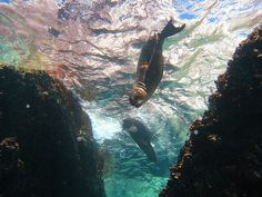 Diving with seals. La Paz, Baja California Sur, MX.