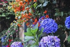 Hydrangea Plant Companions – Tips On Planting Next To Hydrangeas Landscaping Around Patio, Hydrangea Landscaping, Landscaping Plants, Landscaping Ideas, Garden Shrubs, Garden Plants, Garden Shade, Fruit Garden, Garden Bed