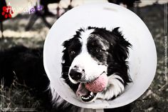 Heridas superficiales. #animales #perros #mascotas