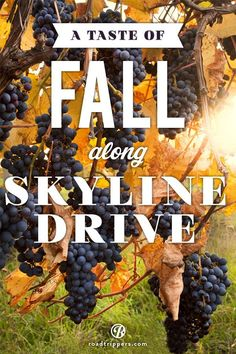 Experience the beautiful fall foliage while you tour the Blue Ridge WIne Way. It's a great addition to your fall travel plans.