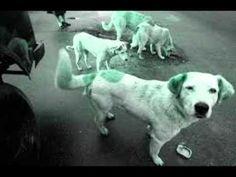 Perros callejeros salvan a una niña de 12 años de las garras de un violad