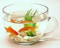 Teacup Fishbowl <3