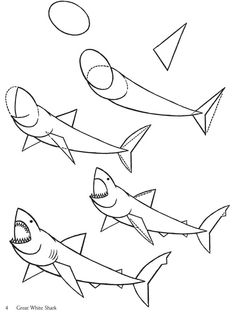 How to Draw a Great White Shark, Step by Step, Fish