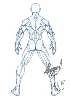 male drawing template | Male Anatomy Template: Back by ~Shintenzu on deviantART