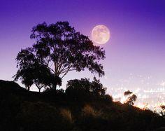 Autumn Moon Over San Diego. ©2009, John Castell.